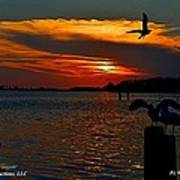 Heron And Seagull Sunset I Mlo Poster