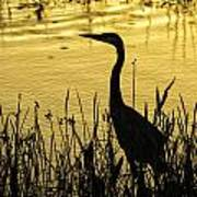 Heron At Sunrise Poster
