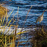 Heron Fishing Poster