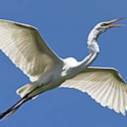 Heron Flight Poster