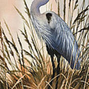 Heron In Tall Grass Poster
