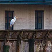 Heron In The Window Poster