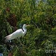 Heron In Tree Poster