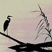 Heron Morning Poster