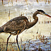 Heron On A Cloudy Day Poster