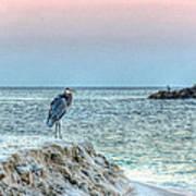 Heron On Beach Poster