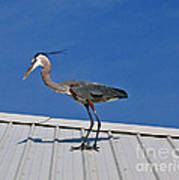 Heron On Rooftop Poster