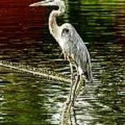 Heron On The Stick Poster