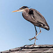 Heron Up On The Roof Poster