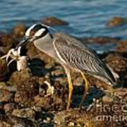 Heron With Crab Poster