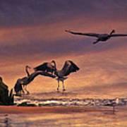 Herons At Sunset Poster