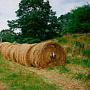 Hey- Hay Roll Poster
