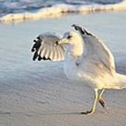 Hey Wait - Sea Gull Poster