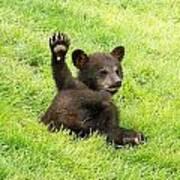 Hi Five Bear Poster