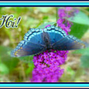 Hi Hello Greeting Card - Red Spotted Purple Butterfly Poster