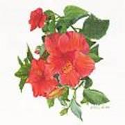 Hibiscus 1 Poster
