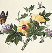 Hibiscus And Butterfly Poster