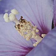 Hibiscus Blue Poster