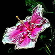 Hibiscus On Black - Three Poster