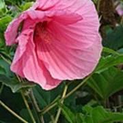 Hibiscus Profile Poster
