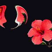 Hibiscus Seed Dream Digital Art Poster