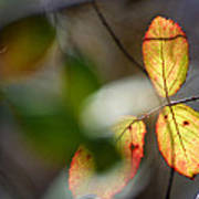 Hidden Forest Leaves Poster