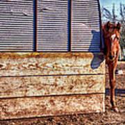 Hidden Horse Poster
