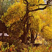 Hidden In The Trees Poster