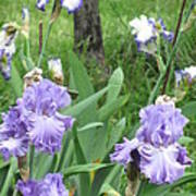Hidden Iris Poster