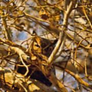 Hidden Owl Poster