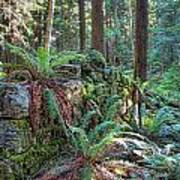 Hidden Rock Wall Poster
