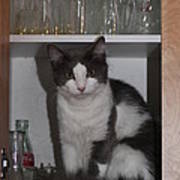 Hiding In The Cabinet Poster