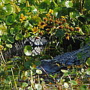 Hiding In The Marsh Poster
