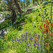 High Country Wildflowers Poster
