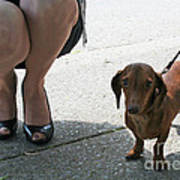 High Heels And A Dachsund Poster