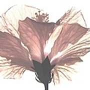 High Key Hibiscus Poster