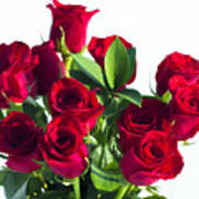 High Key Red Roses Poster