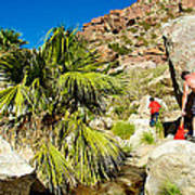 Hikers At Oasis On Borrego Palm Canyon Trail In Anza-borrego Desert Sp-ca  Poster