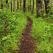Hiking Through The Blue Ridge I Poster