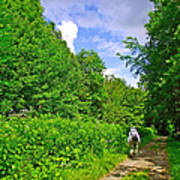 Hiking Trail Along Rivier Du Nord In The Laurentians North Of Montreal-qc Poster