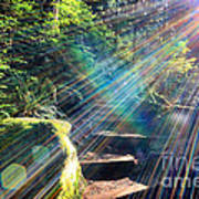 Hiking Trail Sun Flares Poster