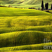 Hills Of Toscany Poster