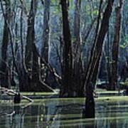 Hillsborough Swamp Autumn 32 Poster