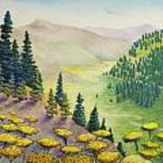 Hillside Of Yarrow Flowers With Pine Tress Poster