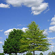 Hilltop Trees Poster