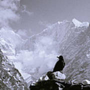 Himalayan Freedom Poster