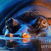 Hippopotamus  At Sunset Poster