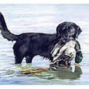 His First Catch Poster by Brenda Beck Fisher