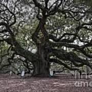 Historic Angel Oak Poster