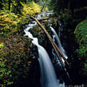 90122 Hoh Rainforest Poster
